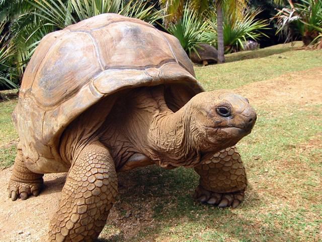 """Který ze živočichů se dožívá nejdelšího věku? Ano, každý přirozeně odpoví, že k největším """"prababičkám"""" a """"pradědečkům"""" živé přírody patří želvy či sloni. Kromě nich však patří na první místa žebříčku i tací, kteří se na výsluní zájmu laiků příliš nevyhřívají. 21. STOLETÍ vás nyní seznámí s těmi, kteří by vás jen tak nenapadli."""