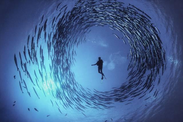 Masivní výlov světových moří v honbě za rybím masem a patřičným ziskem narazil na své meze. Tuto pravdu, o níž se mezi zodpovědnými lidmi hovoří již dlouhou dobu,  se nedávno kanadským vědcům podařilo převést do přesné řeči čísel.