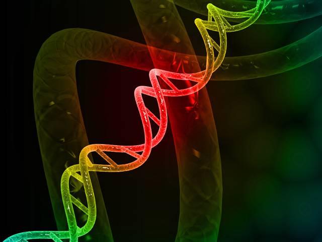 Tým vědců z Bostonské univerzity nedávno vyvolal odborné i laické diskuze publikováním výsledků svého výzkumu genetických zákonitostí dlouhověkosti. Výsledky potvrdily soubor 150 jednobodových změn v celém lidském genomu. Těch 150 změněných písmen genetického kódu prý přidělilo jejich nositelům zdraví a delší čas života. Nebo naopak – nemáte-li je, dostali jste handicap už na startu.