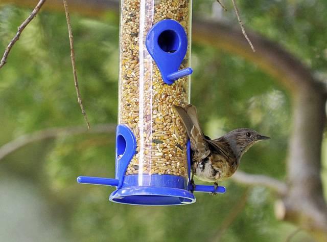 Stěží si dovedeme život představit bez rozmanitých druhů ptáků. Na Zemi žijí mnohem déle než lidé. Badatelé už desítky let zkoumají mnohé aspekty ptačího života. Kupodivu stále nově nacházejí velice cenné poznatky.