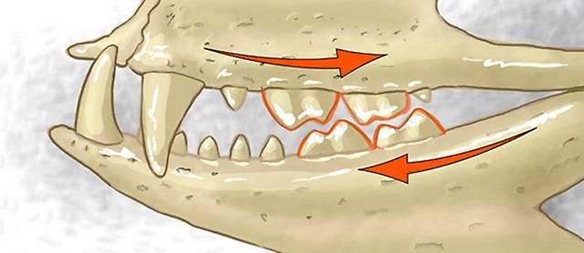 Z práce paleontologů uvidí většina lidí pouze krásně vypreparované a zrekonstruované zbytky dávných zvířat v některém ze světových muzeí. Od objevu fosilizovaných zbytků k poznatkům o podobě či životních nárocích daného tvora však vede dlouhá cesta. Nejinak tomu bylo i při rekonstruování dávného krokodýla, nalezeného nedávno v africké Keni.
