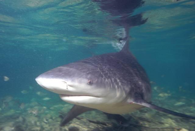 Ekologové z University of Florida v Gainesville objevili žraloky, kteří mají k dispozici zbraň ještě strašnější než proslavené čelisti a trojúhelníková ploutev. Ve vodách poblíž Florida Keys a Belize žijí paryby a ryby, které hostí ve svých tělech bakterie odolné vůči neuvěřitelně širokému spektru klinicky používaných antibiotik.