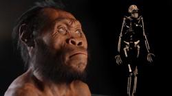 Objeven nový druh člověka!