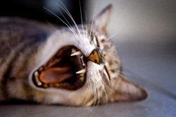 I psi a kočky potřebují svého zubaře!