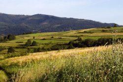 Čeští vědci řeší, jak předejít rozvratu ekosystémů