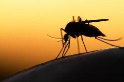 5 osudových zásahů malárie do historie