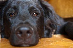 Britští veterináři varují: Zvířata při užívání homeopatik trpí!