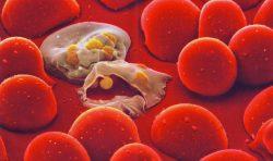 10 osudových zásahů malárie do dějin