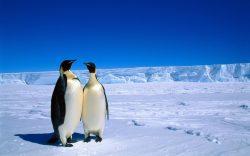 Deset let českého výzkumu Antarktidy