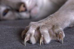 Jak nebezpečné může být kočičí škrábnutí?