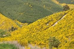 Invazní druhy rostlin ničí původní ekosystémy