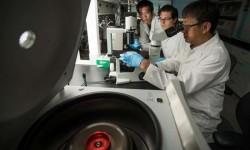 Je oživení prehistorického viru nebezpečné?