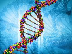 Vědci uchovávají DNA vážně ohrožených živočichů pro příští generace