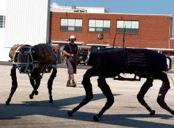 Vojenští roboti, co vypadají jako zvířata