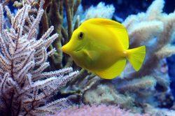 Většina ryb v Atlantiku má v sobě plasty
