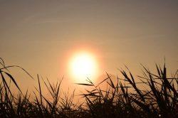 Čeští vědci pomáhají zemědělcům bojovat se suchem