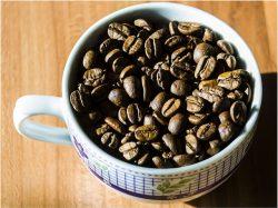 Kávové plantáže v ohrožení! Ničí je nebezpečná choroba