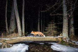 Czech Nature Photo představí nejlepší fotografie