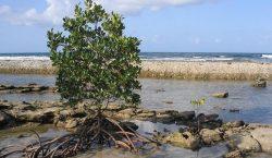Vyhynutí hrozí až třetině druhů afrických rostlin