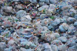 S likvidací plastového odpadu nám pomůže hmyz