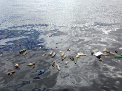 Znečištěná voda v oceánech rozpouští žraloky zaživa