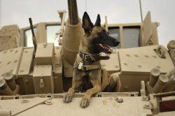 Technologie pro čtyřnohé miláčky: Americká armáda poskytne svým psům rozšířenou realitu
