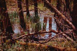 Zadržování vody v přírodě: Jak můžete pomoci i vy?