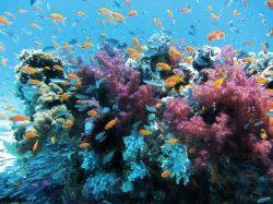 Koráli ve stresu