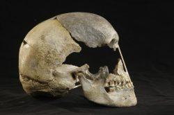 Dosud nejstarší genom moderních lidí byl rekonstruován z lebky ženy žijící před více než 45 000 lety.