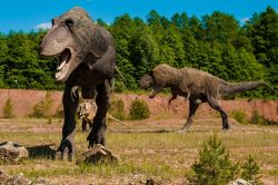 Tyranosauři měli vlastní loveckou taktiku