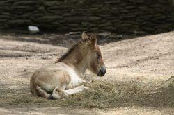 V liberecké zoo mají mladé
