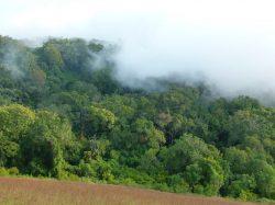 Africké horské lesy zadržují více uhlíku, než se předpokládalo, rychle ale mizí