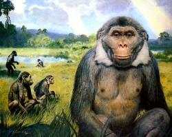Domovem lidoopů nebyla pouze Afrika