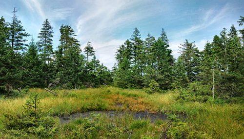 Suchem v lesích nejvíce trpí smrky