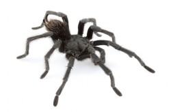 Johnny Cash má svého pavouka