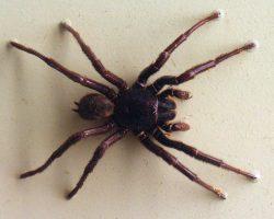 Pavoučí jed zachrání mozek při mrtvici