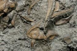 Nejstarší jurský dinosaurus žil ve Walesu