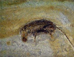 Rozmach savců nastal dlouho před vyhynutím dinosaurů