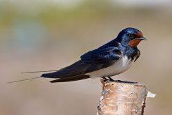 Na oteplování reagují ptáci dřívější migrací