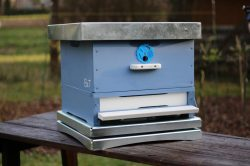 Pomůže chytrá digitální váha BeeSpy zachránit včely?