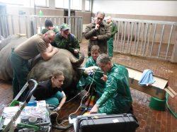 Pokročilé reprodukční technologie poskytují reálnou šanci na záchranu kriticky ohrožených nosorožců