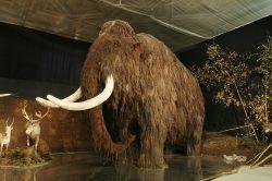 Mamuta rozřezali pravěcí lovci