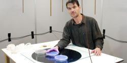 Čeští vědci zjistili, jak zvířata vnímají magnetické pole Země