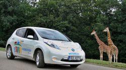 Projeďte se elektromobilem po Zoo ve Dvoře Králové