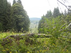 Změny klimatu útočí i na lesy