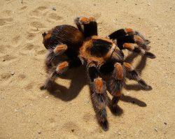 Pavouci sežerou za rok 400 až 800 milionů tun kořisti