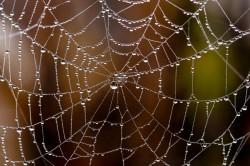 Vědci vyvinuli materiál imitující pavučinová vlákna