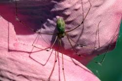 Grafen dodá pavoučím vláknům super sílu