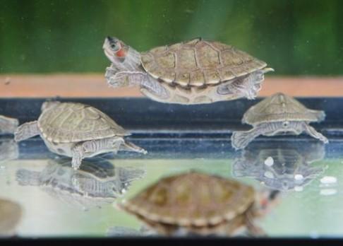 Zoo Praha hlásí přírůstek