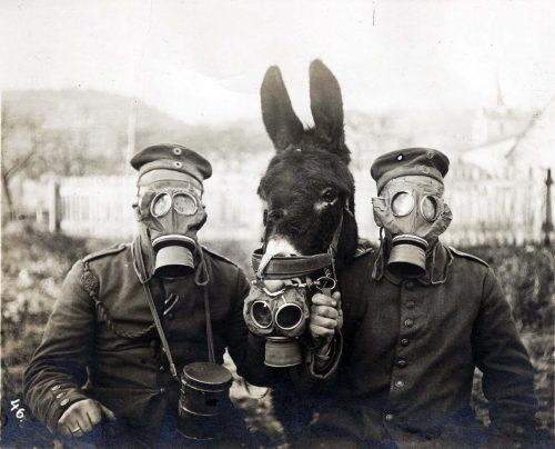 Two German soldiers and their mule wearing gas masks, 1916